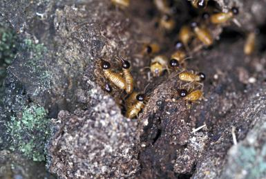 10 Fascinating Facts about Termites